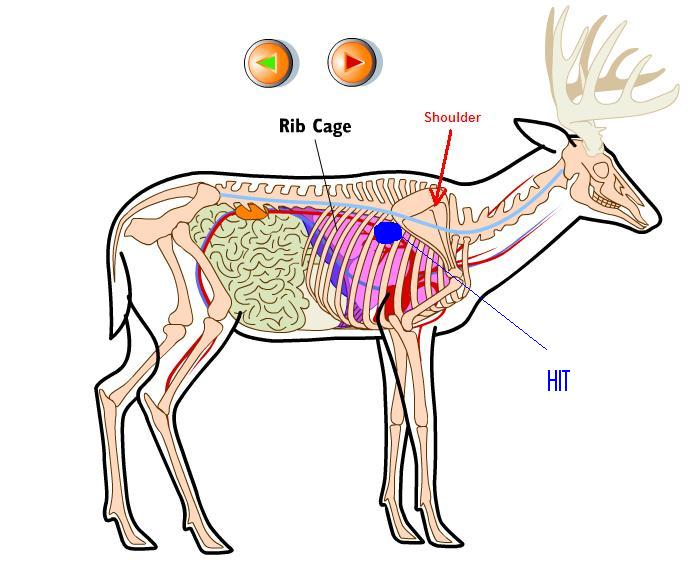 Deer Shoulder Diagram Wiring Diagram